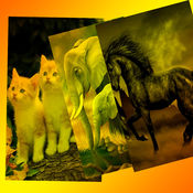 动物背景和壁纸 3.4