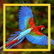 鸟儿和声音为孩子 1