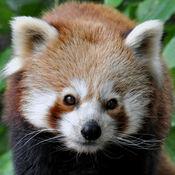 记忆对卡 纽伦堡动物园 免费的 中国游戏 学龄前儿童,中小学