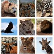 动物测验 - 猜从图片动物 - 教育和学习游戏的每一个人。 1