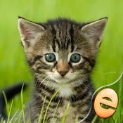 拼图神奇小猫拼...