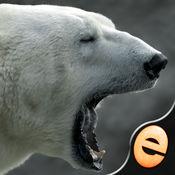 益智欢乐北极熊...