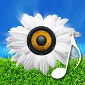 放松的声音从自然 – 音乐播放器同伟大的歌曲帮助你的睡眠