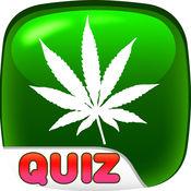 大麻 测验 免费 教育 学习 琐事 测试 1