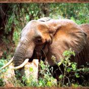 大象声 7.1.1