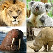 动物小测验 - 了解动物园里的所有哺乳动物!