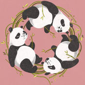 熊猫高清壁纸和背景 1