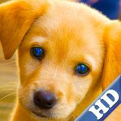 幼儿拼图 – 小狗,幼犬 HD 1