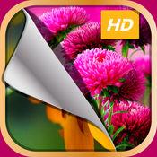高清花壁纸 – 美丽的花卉主题和自定义锁屏背景 1