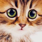 可爱的小猫猫壁纸和背景 1