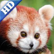 幼儿拼图 – 熊猫,猴, 动物 HD 1