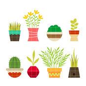 植物的名称知识百科:自学指南、视频教程和技巧 1