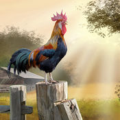 鸡年高清壁纸收藏图库-个性名言主题背景 1