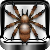iPad的攻击蜘蛛 - 可怕的蜘蛛