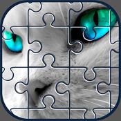 猫的益智游戏图...