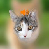 猫的声音效果 1