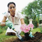 家庭园艺和园林庭院知识百科:快速自学指南和视频指导 1