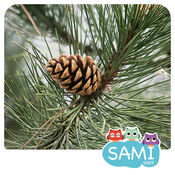Sami Tiny FlashCards 森林 Woods adventure kids apps 1