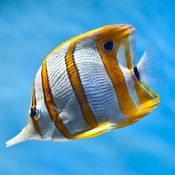Sea Life Videos  1