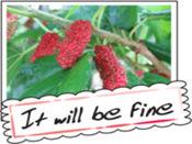 水果照片贺卡贴纸,设计:wenpei 1
