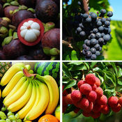 看图猜水果-水果知识大全,来比拼一下吧!