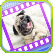 有趣的狗视频 1