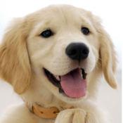 犬壁纸高清+只有最好的狗壁纸 + Only the best DOGS wallp