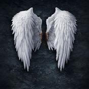 天使的翅膀高清壁纸收藏图库:个性名言主题背景