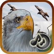 自然的声音鸟 1.0.1