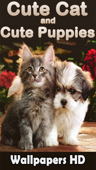 Best Cute Puppies and Cute Cat Wallpapers HD
