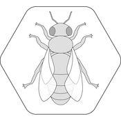 Bienenpfad 1.1