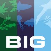 BIG Project 1.2