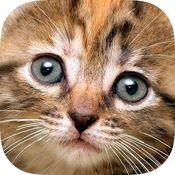 智能拼图猫HD精...