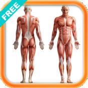 人体解剖/结构/...