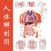 人体解剖图 - 全彩高清医学专业典籍 3.2.1
