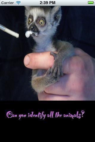 Baby Animal Identifier