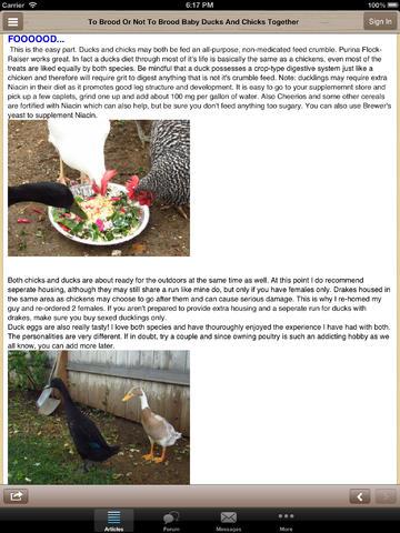 Backyard Chickens (BYC)