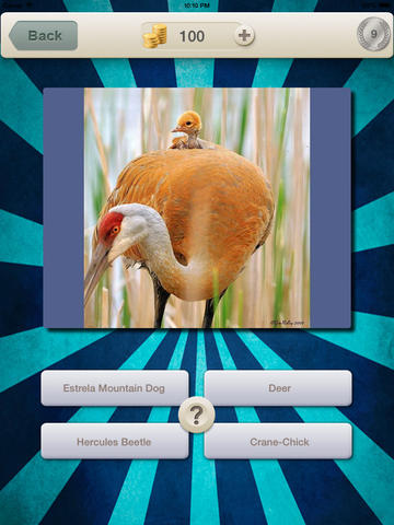 Baby Animals Quiz - Picture Guess Trivia the most famous jungle animal new fun puzzle for kids