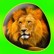 动物 - Animals 360 7