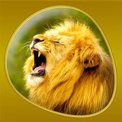 动物 - Animals 360 Gold 7