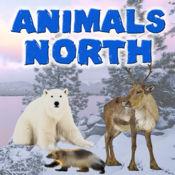 动物北 3.1