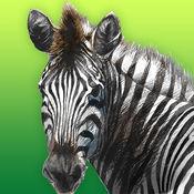 AR动物世界 1
