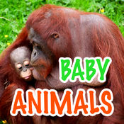 Baby Animals - Learn Animal Names!