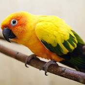 Beautiful Birds Sounds