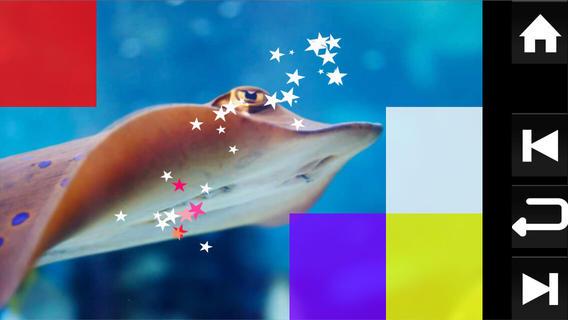 Baby Discover Aquatic