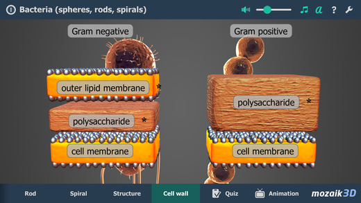 Bacteria 3D