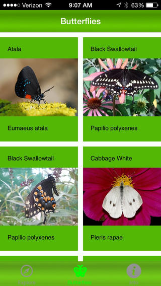 Butterflies Alive