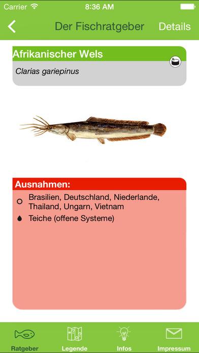 Einkaufsratgeber Fisch