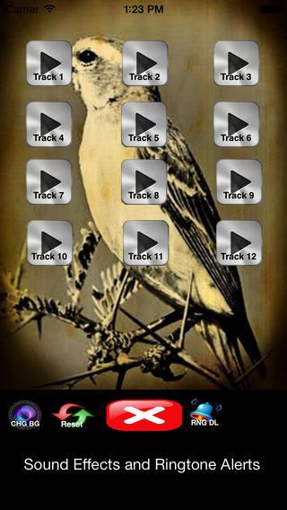 """金丝雀"""" - 大自然本身的天堂 - 音板"""