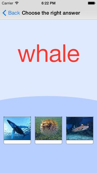 海洋动物。卡和测验